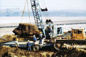 Abb. 13: Bergung eines 3,20 Meter dicken Mammutbaumstubbens Sequoioxylon gypsaceum im Tagebau Klettwitz