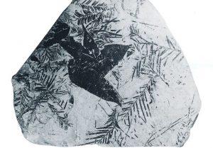 Fossile Pflanzenreste aus dem Liegendton des 1. Lausitzer Flözes (Tagebau Klettwitz)