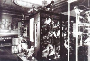 Zwei Räume des 1925 eröffneten Städtischen Museums mit der naturkundlichen Sammlung