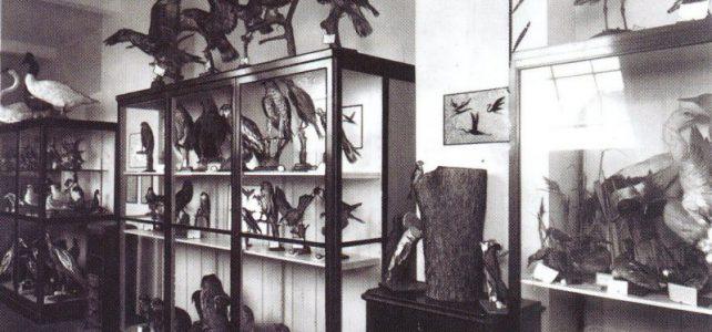 Zur Geschichte geologischer Sammlungen in Cottbus