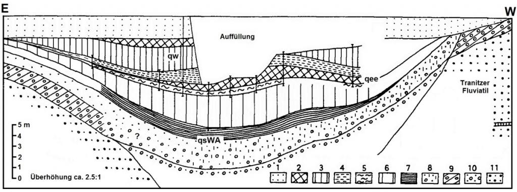 Geologische Skizze des Interglazialvorkommens von Klinge (ältere Dominialgrube)im heutigen Anschnitt (geol. Aufnahme: R. und U. Striegler 1985)