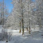 Tertiärwald im Winter