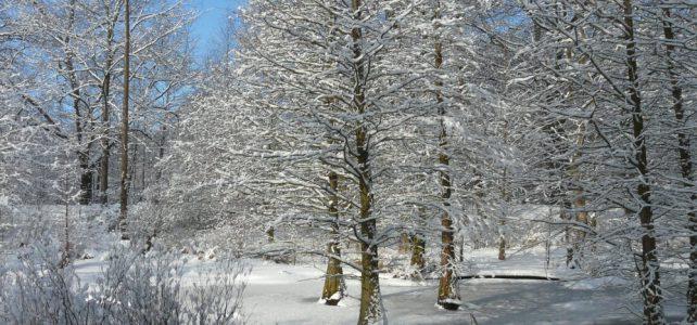 Neue paläobotanische Ergebnisse zum Tertiärwald