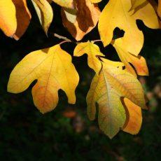Herbst im Tertiärwald