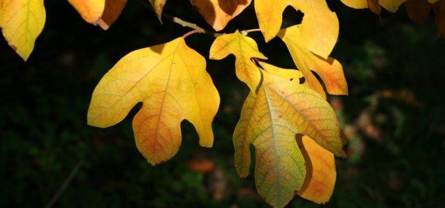 Herbst im Tertiärwald 2019