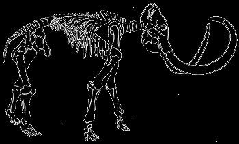 Gefundene Skelett-Teile des Mammuts