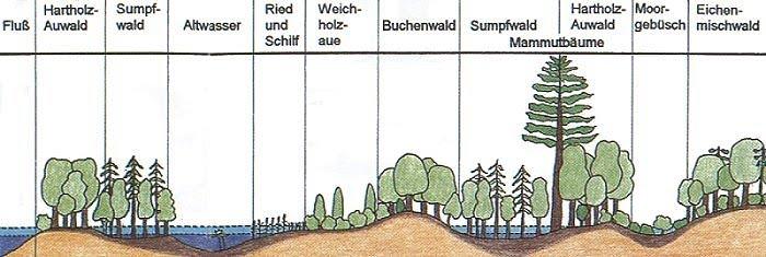 Rekonstruktion der fossilien Flora von Wischgrund