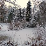 Kohlemoor im Winter