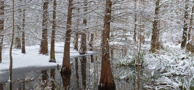 Winter im Tertiärwald