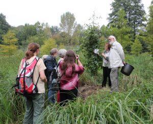 Pflanzung eines Tupelobaum 2014