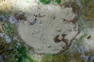 """Detailaufnahme einer Quelle im """"Urwald"""" Groß Jamno"""