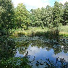 """Geführte Wanderung im Groß Jamnoer """"Urwald"""""""