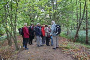 Führung durch den Tertiärwald mit Rolf Striegler, Gruppe an Amerikanischer Rotbuche