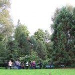 Tertiärwald, Bereich mit Mammutbäumen