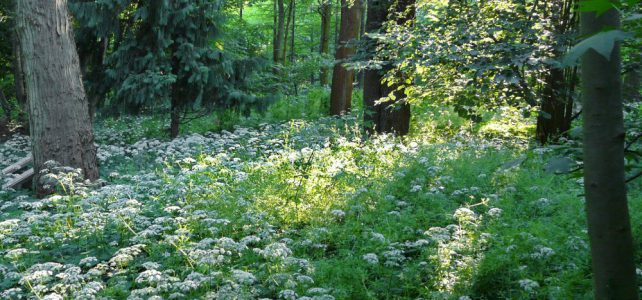 Der Tertiärwald im Juni
