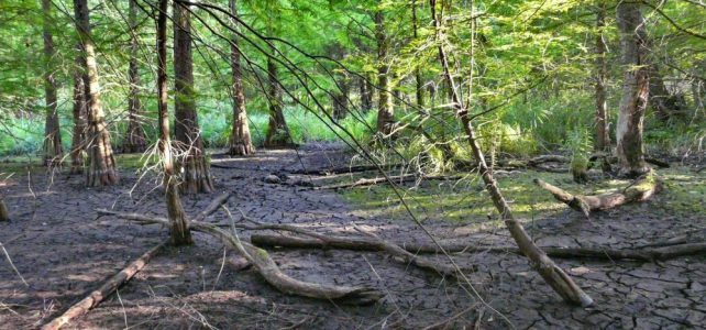 Der Tertiärwald im Juli