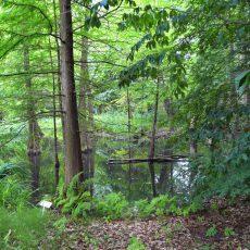 Der Tertiärwald im August