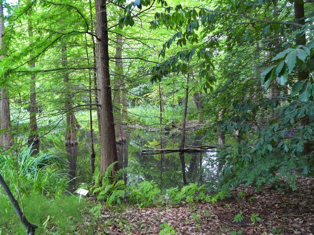 Der Sumpfwald führt wieder Wasser