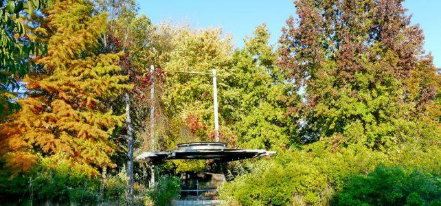 Der Tertiärwald im Oktober