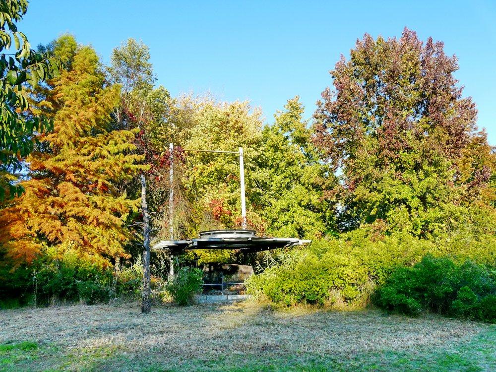 """Am Mammutbaumstubben, die beginnende Herbstfärbung stimmt schon auf die Veranstaltung """"Herbst im Tertiärwald"""" am 19. Oktober ein"""