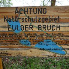 """Wanderung zu den Katzenbergen in das NSG """"Euloer Bruch"""""""