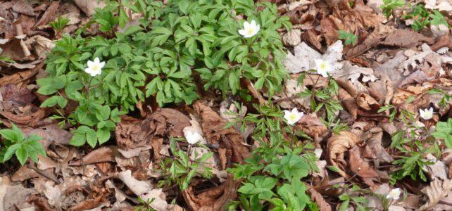 Der Tertiärwald im April